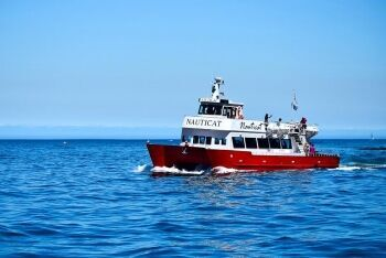 Sea excursion at Hout Bay, Cape Town, Western Cape